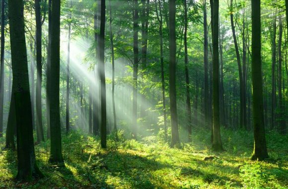arti mimpi hutan