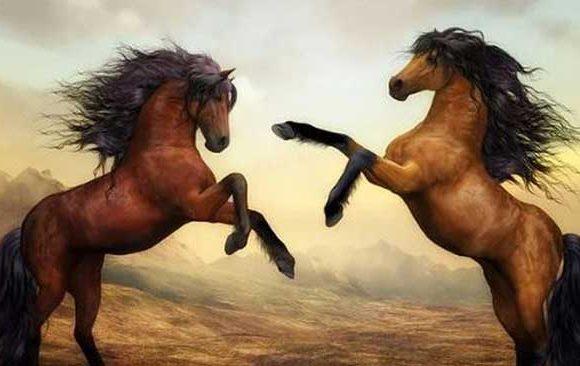 Melihat-Kuda-Berkelahi