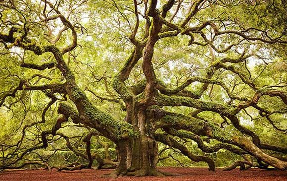 Mimpi-Berada-Didalam-Pohon-Raksasa
