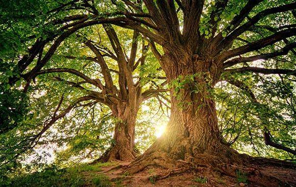 Mimpi-Melihat-Pohon-Berjalan