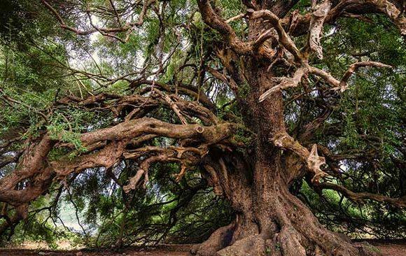 Mimpi-Melihat-Pohon-Raksasa