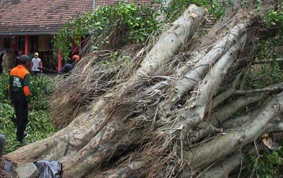 Mimpi-Melihat-Pohon-Tumbang-di-Depan-Rumah
