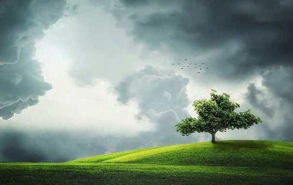 Mimpi-Melihat-Pohon-Tumbuh-Dengan-Subur
