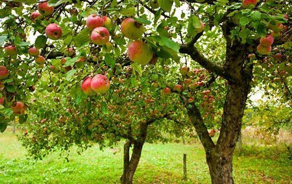 Mimpi-Melihat-Pohon-Tumbuh-Dengan-Subur-Disertai-Dengan-Buah-–-buahan