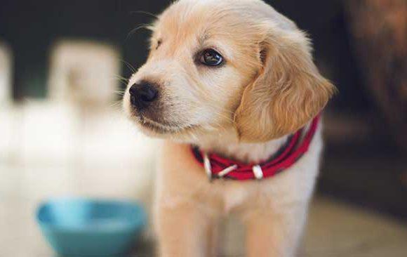 Mimpi-Mengenai-Anjing
