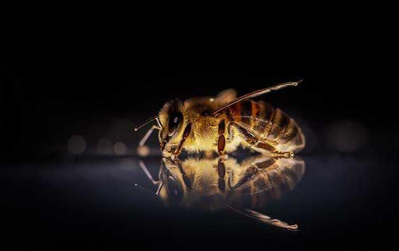 Mimpi-Mengenai-Serangga
