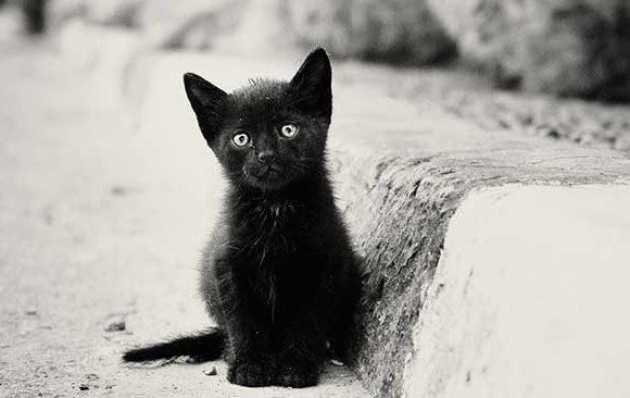 Mimpi-mengenai-Kucing-Hitam